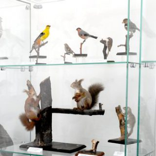 Birds and Indigenous Animals